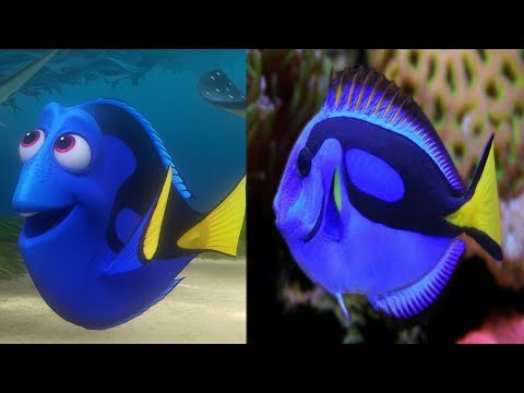 finding dory characters in real life ! 2018