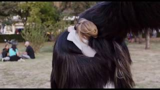 Nonton Hug at the Park – Toni Erdmann (Maren Ade, 2016) Film Subtitle Indonesia Streaming Movie Download