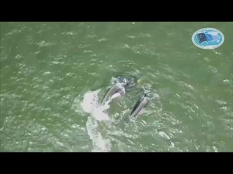 Ρωσία: Απελευθερώθηκαν φάλαινες σε αιχμαλωσία