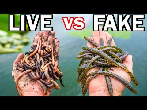 LIVE BAIT vs ARTIFICIAL LURE Fishing Challenge!!! (Surprise Catch!) - Thời lượng: 16 phút.