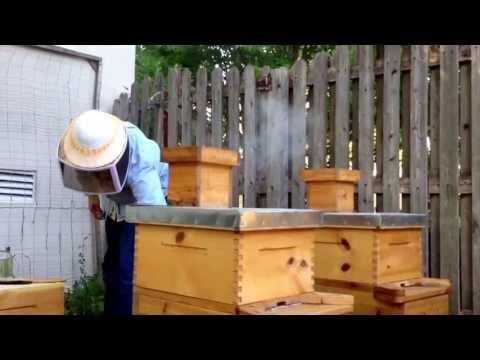 Beekeeping for beginners 7