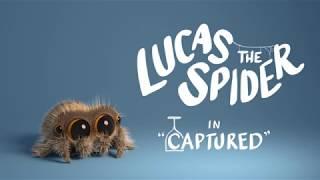 Video Lucas the Spider - Captured MP3, 3GP, MP4, WEBM, AVI, FLV Februari 2018