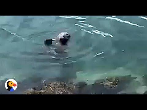 la-foca-che-saluta