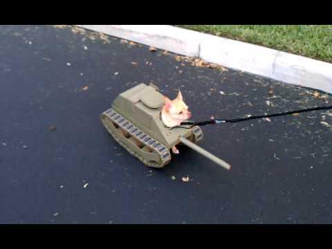 武器+狗=古代兵器!殺傷力超強