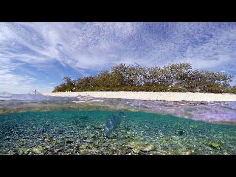 Greenpeace: Αποκαλυπτικό βίντεο της καταστροφής του Μεγάλου Κοραλλιογενή Υφάλου