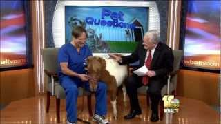 How To Handle Dental Problems In Household Pets