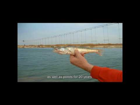 עופר ברזק אכלוס הים בדגים
