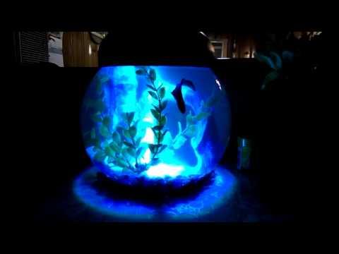 Aqua culture 1 gallon betta aquarium for Betta fish light