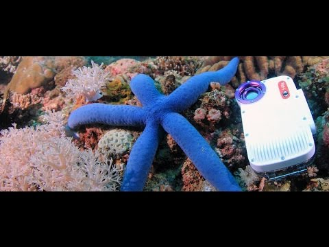 iPhone 4, iPhone 4S Underwater Video Test Wide Angle Lens & Filters by Freedom Divers Phuket