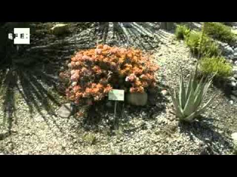 Museo del cactus, Casarabonela