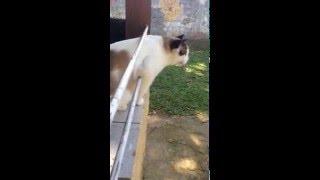 Esse meu gato,ele viu um passarinho miou estranho vc ja viu isso ,se ja comenta ai