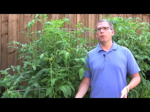 Garden tips - http://www.cleanairgardening.com/tomato-growing-products.html Are you interested in growing tomatoes or tomato plants? Before you get to planting, check this...