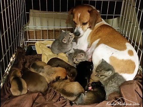 l'amore di una madre supera le differenze di specie
