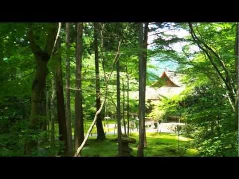 京の紫陽花めぐり、どこへゆく2012 一覧 !?