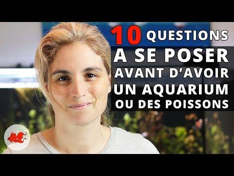 10 Questions avant dacheter un aquarium ou des poissons_Akvárium