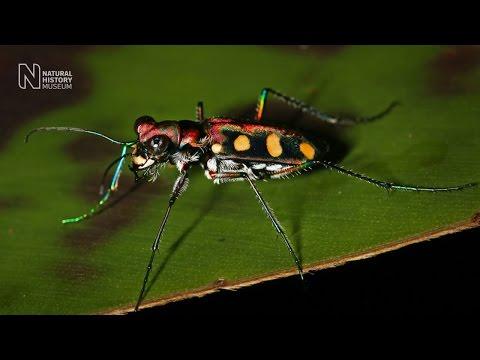 Borneo biodiversity count
