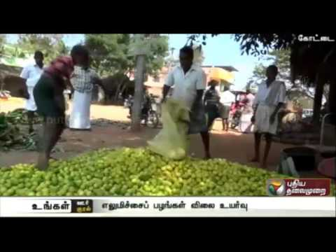 Farmers-in-Pudukottai-pleased-with-the-increase-in-price-of-lime