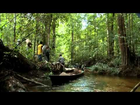 Indonesia's Forests Potential Economy