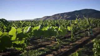 New Zealand wines is one of the premier New World wine-growing nations. Its temperate maritime climate and diverse growing...