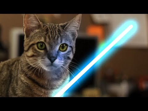 force - Share: http://bit.ly/sharejedi This Jedi Cat has got the Force! Thanks to Aaron for working on the video: http://www.youtube.com/thevfxbro Andrew wrote aweso...