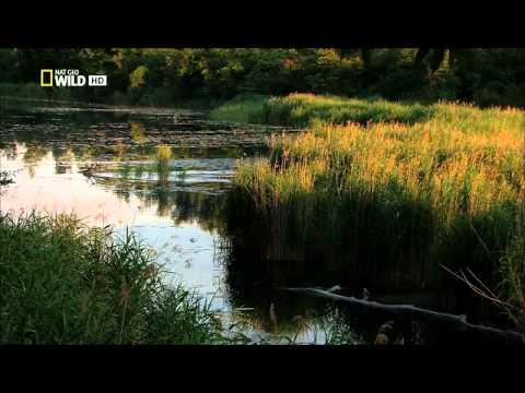 Dunaj evropská Amazonka E01