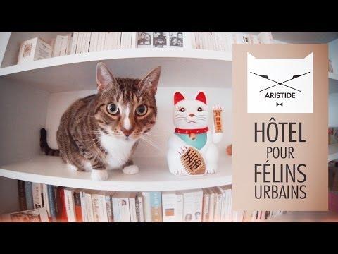 Abre en París un hotel de lujo para gatos urbanos