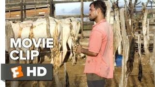 Neon Bull Movie CLIP - Tails (2016) - Juliano Cazarré, Maeve Jinkings Drama HD