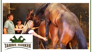 Download Video Tamme Hanken  | Der Hengst darf ran | kabel eins MP3 3GP MP4