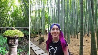 Kamakura Japan  city photo : Bamboo Forest in Kamakura - SO BEAUTIFUL!! Tokyo vlog
