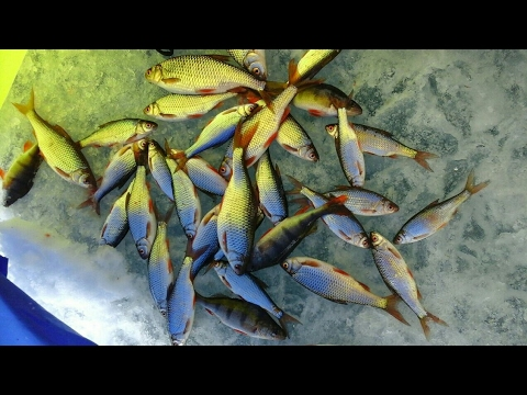 рыбалка на фыркале 2017 бесплатно