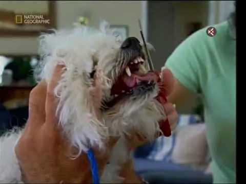 Znalec psí duše- Ruby, Rana, Boomer a Josh