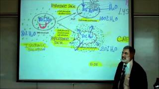 DIFFUSION, OSMOSIS&ACTIVE X-PORT ACROSS CELL MEMBRANES By Professor Fink