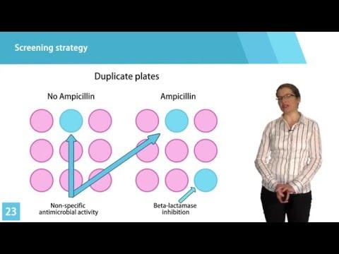 REpotentiating Beta Lactam antibiotics REBEL