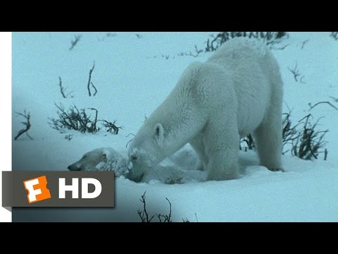 Arctic Tale (5/10) Movie CLIP - Starving in the Blizzard (2007) HD