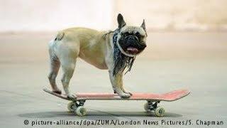 Startup cria o brinquedo que todo cão gostaria de ter