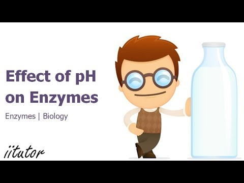 √√ Experiment Effect of pH on Enzymes | iitutor