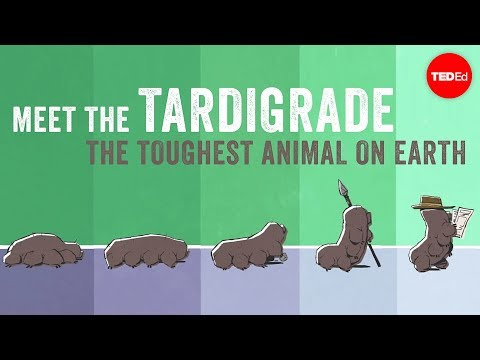 Meet the tardigrade the toughest animal on Earth