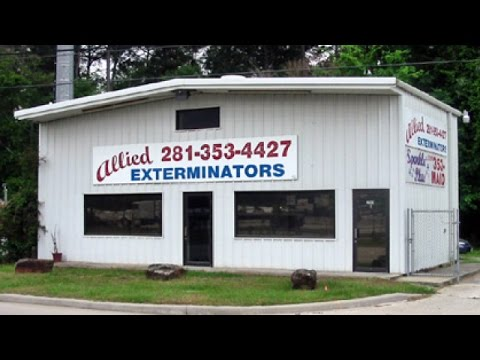 Termite and Pest Control Spring TX