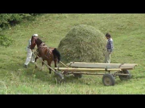 Romania, Transylvania Hay Camp 2015 Part 2 (of 3) - Thời lượng: 15 phút.