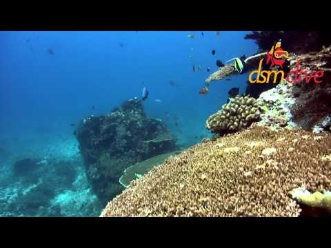 DSM Dive -- Plongée Lombok -- Diving Lombok & Gili --  Manta Point