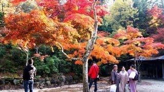宮島 紅葉谷公園の紅葉