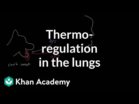 Thermoregulation In The Lungs Video Khan Academy