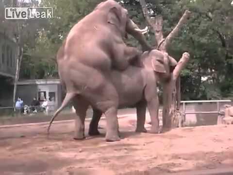 porno-s-slonom-foto