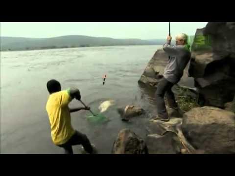 Из африки – тигровая рыба голиаф