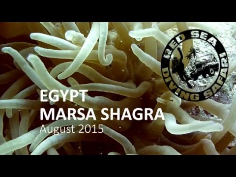 Diving Marsa Shagra - August 2015