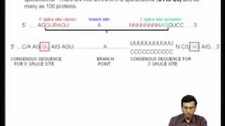 Mod-04 Lec-11 Co-transcriptional And Post-transcriptional Modifications Of Pre Messenger RNA-I