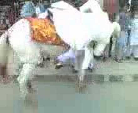 Funny Pakistani Wedding