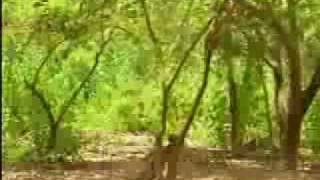 Thế giới động vật - Video.flv