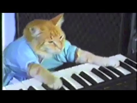 Funniest cat videos ever compilation!