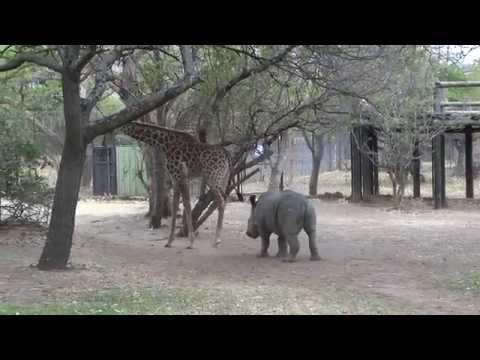 �irafa nakope nosoro�ce